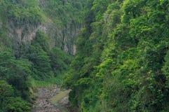 Canyon del fiume in foresta pluviale Fotografia Stock