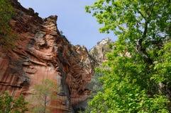 Canyon dell'insenatura della quercia Fotografia Stock Libera da Diritti