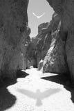 Canyon dell'ombra dell'uccello Immagini Stock Libere da Diritti