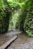 Canyon della felce fotografia stock libera da diritti