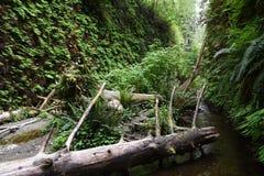 Canyon della felce Fotografie Stock Libere da Diritti