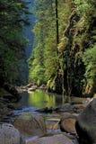 Canyon della Lynn a Vancouver Fotografia Stock Libera da Diritti
