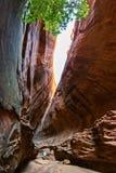 Canyon della scanalatura nell'Utah fotografia stock libera da diritti
