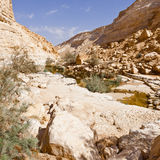 Canyon in Desert Royalty Free Stock Images
