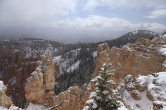 Canyon di Bryce nella neve nel maggio 2011, gli Stati Uniti. Immagine Stock