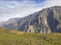 Canyon di Colca, Arequipa, Perù. Immagine Stock Libera da Diritti