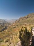 Canyon di Colca nel Perù Immagine Stock