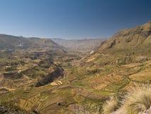 Canyon di Colca nel Perù Fotografia Stock