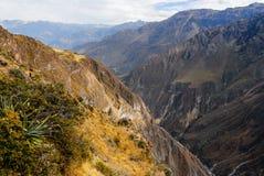 Canyon di Colca, Perù Fotografie Stock Libere da Diritti