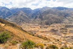 Canyon di Colca, Perù Fotografia Stock