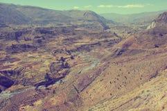 Canyon di Colca, Perù, Sudamerica Fotografia Stock Libera da Diritti