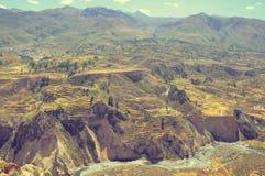Canyon di Colca, Perù, Sudamerica Fotografie Stock Libere da Diritti