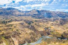 Canyon di Colca, Perù, Sudamerica.  Inche per sviluppare agricoltura dei terrazzi con lo stagno e la scogliera. Immagine Stock Libera da Diritti