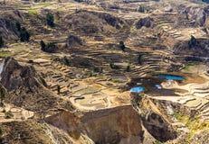 Canyon di Colca, Perù, Sudamerica. Inche per sviluppare agricoltura dei terrazzi con lo stagno e la scogliera. Uno dei canyon più  Immagine Stock