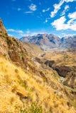 Canyon di Colca, Perù, Sudamerica Inche per sviluppare agricoltura dei terrazzi con lo stagno e la scogliera Uno dei canyon più p Immagini Stock Libere da Diritti