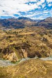 Canyon di Colca, Perù, Sudamerica Inche per sviluppare agricoltura dei terrazzi con lo stagno e la scogliera Uno dei canyon più p Fotografia Stock Libera da Diritti