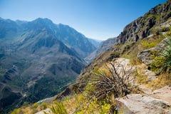 Canyon di Colca Uno dei canyon più profondi nel mondo Immagine Stock