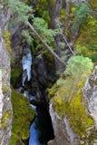 Canyon di Maligne Fotografia Stock