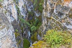 Canyon 0682 di Maligne Fotografia Stock