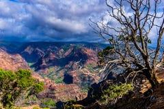 Canyon di Waimea fotografia stock