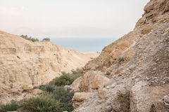 Canyon in En Gedi Nature Reserve and National Park, Israel Stock Images