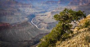 Canyon grand images libres de droits