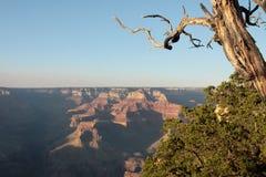 Canyon grande - vista dall'orlo del sud Fotografie Stock Libere da Diritti