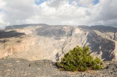 Canyon in Jabal Shams. Oman with bush growing in front Royalty Free Stock Photography