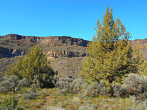 Canyon Juniper. View in Crooked River Canyon at Crooked River Ranch - near Terrebonne, OR stock photography