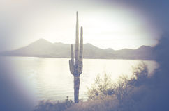 Canyon lake, Tonto National Park, Arizona Royalty Free Stock Photo