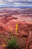 Canyon lands national park Royalty Free Stock Images