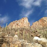 In the canyon. Looking up from Sabino Canyon Stock Image