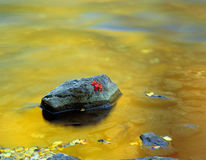 Canyon Maple Leaf, Logan Canyon. A red maple leaf on a rock in a river Stock Photography