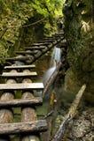Canyon with mountain creek Royalty Free Stock Photo