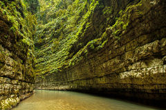 Canyon nella giungla dell'Abkhazia Immagini Stock Libere da Diritti