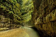 Canyon nella giungla dell'Abkhazia Immagini Stock
