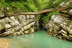 Canyon nella giungla dell'Abkhazia Fotografia Stock Libera da Diritti