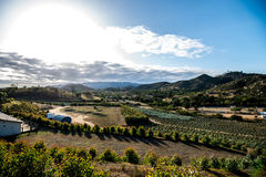 Canyon orchards. Orchards in the hills outside oceanside ca Royalty Free Stock Images