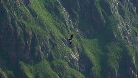 Canyon Peru Near Arequipa de Colca banque de vidéos