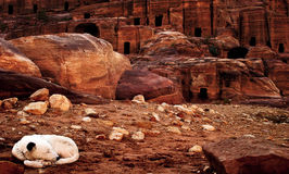 Canyon of Petra, Jordan. Little dog sleeping in canyon of Petra Royalty Free Stock Images