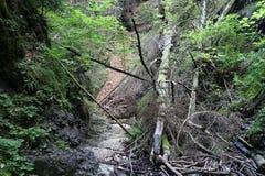 Canyon Piecky in Slovenský raj Slovak Paradise National Park Stock Photography