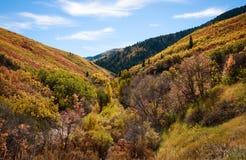 Canyon in pieno delle foglie variopinte in autunno Fotografie Stock Libere da Diritti