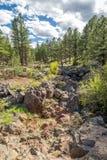 Canyon Rim Trail del sicomoro in Arizona Immagine Stock Libera da Diritti