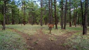 Canyon Rim Trail del sicomoro in Arizona Immagine Stock