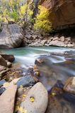 Canyon River. A rushing river passes trees transitioning to fall colors Stock Images