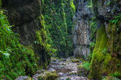 Canyon with a river. Landscape with a beautiful canyon covered in moss and a river flowing through Stock Photos