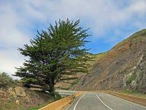 Canyon Road con l'albero Immagine Stock