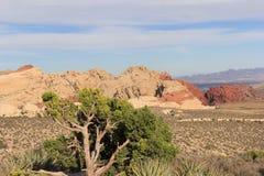 Canyon rossi della roccia immagini stock