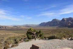 Canyon rossi della roccia Fotografie Stock Libere da Diritti