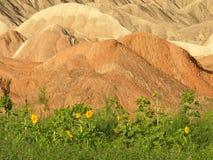 Canyon rosso nello sviluppo delle piante verdi Fotografie Stock